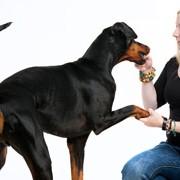 Hundetrainer und -verhaltensberater