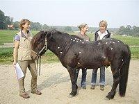 Stresspunktmassage für Pferde