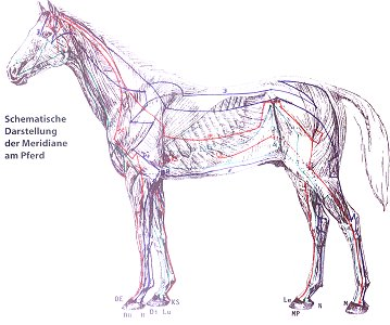 Energetisch-ganzheitliche Pferdepflege - Ausgabe 6/1997