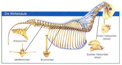 Wenn der Rücken schmerzt - Paracelsus, die Heilpraktikerschulen