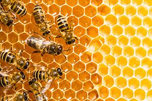 Die heilende Wirkung von Honig