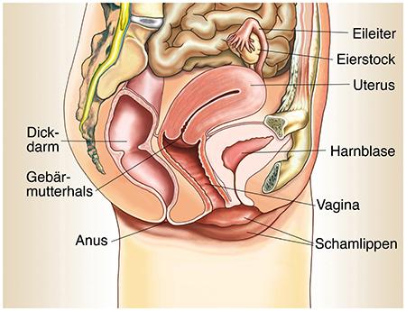 Frauen Unterleib
