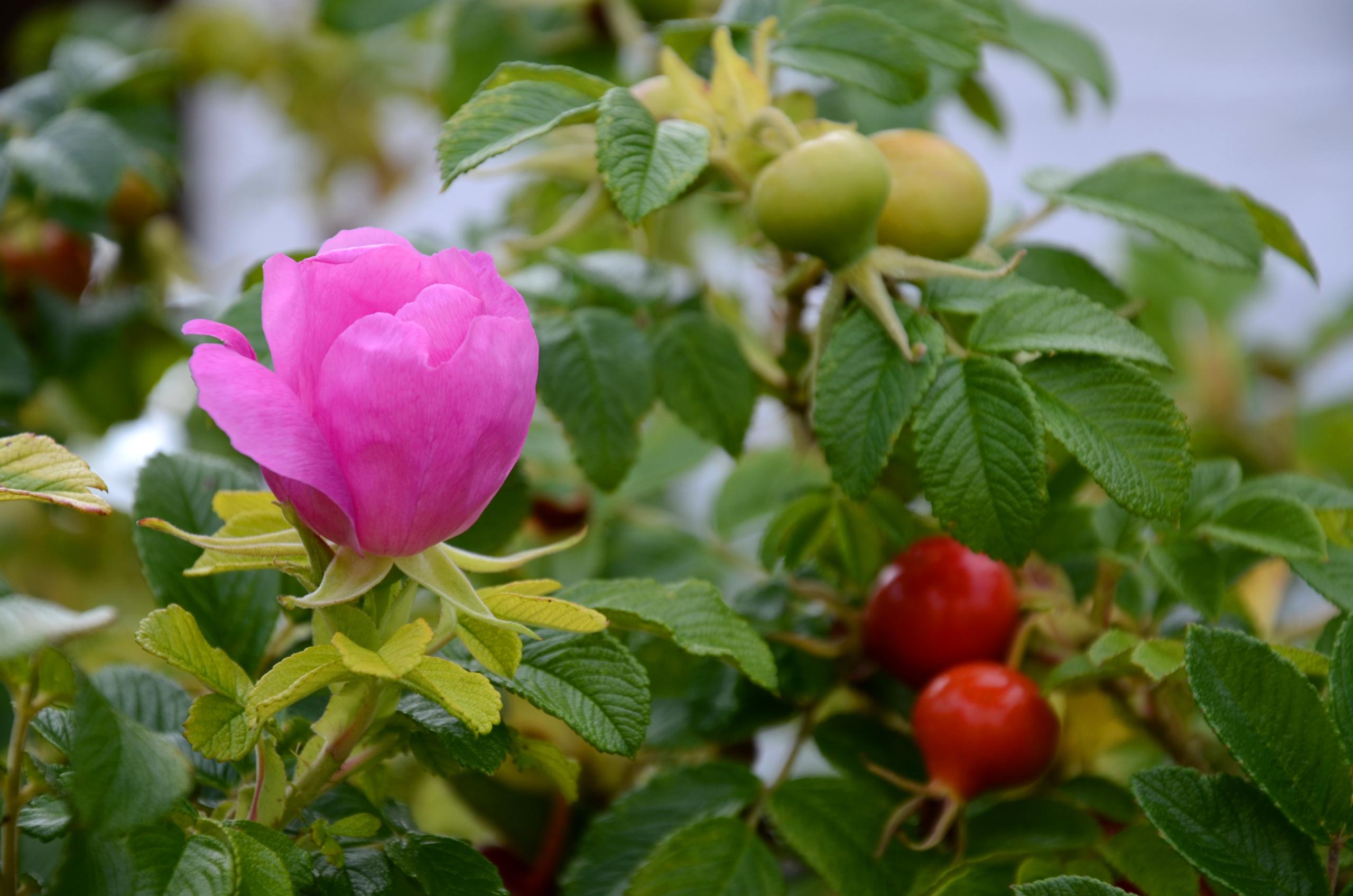 © Rhönbergfoto I adobe.stock.com